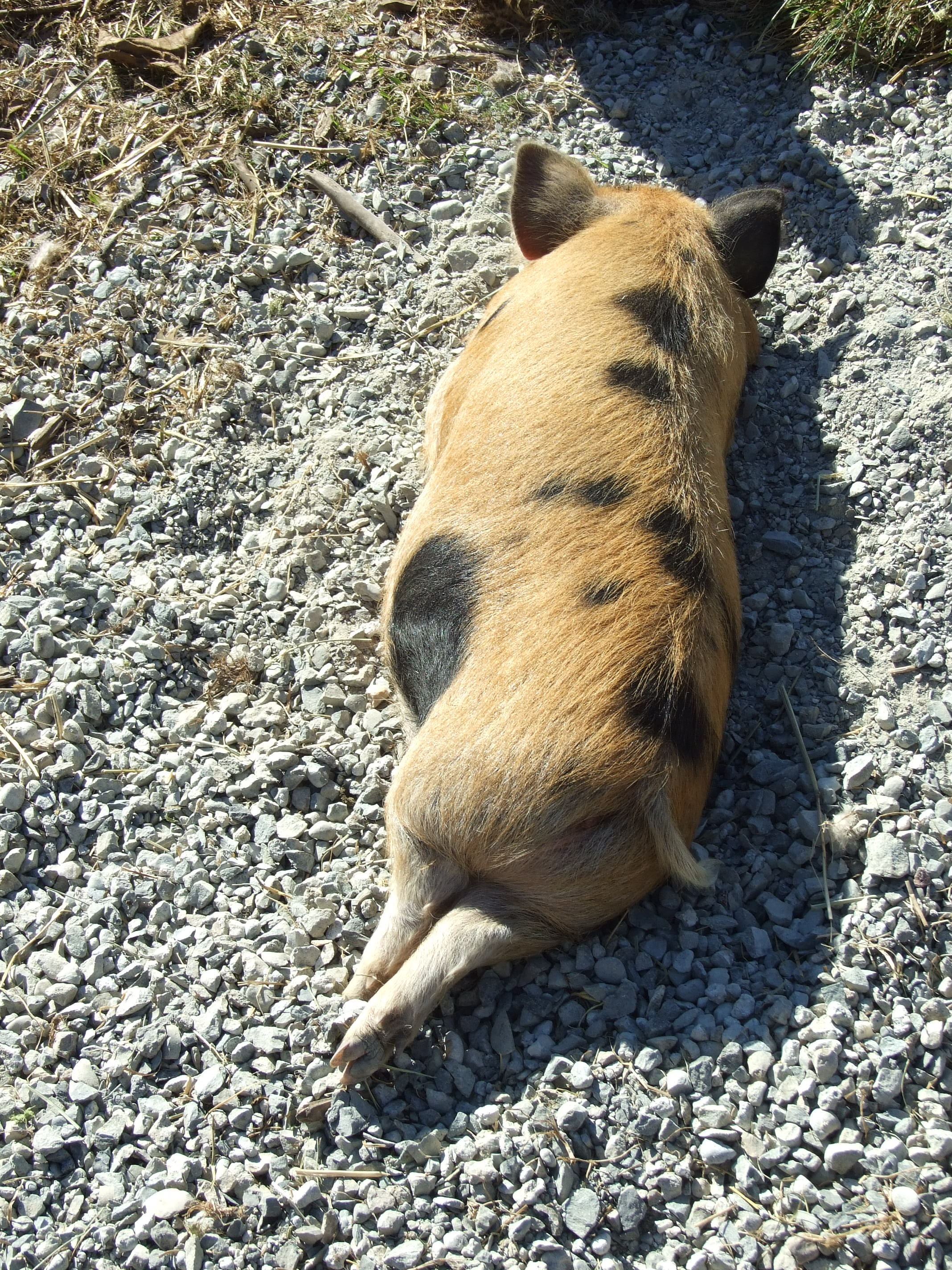 The Kune's Can! – Just Another Weed Patch Farm