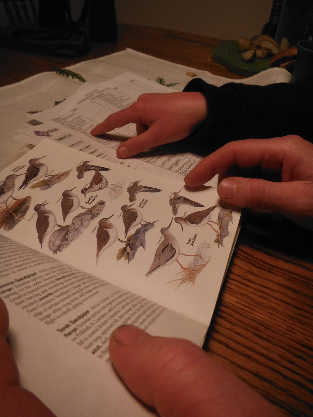 The boys prepare their bird brains for the December 30 Christmas Bird count...