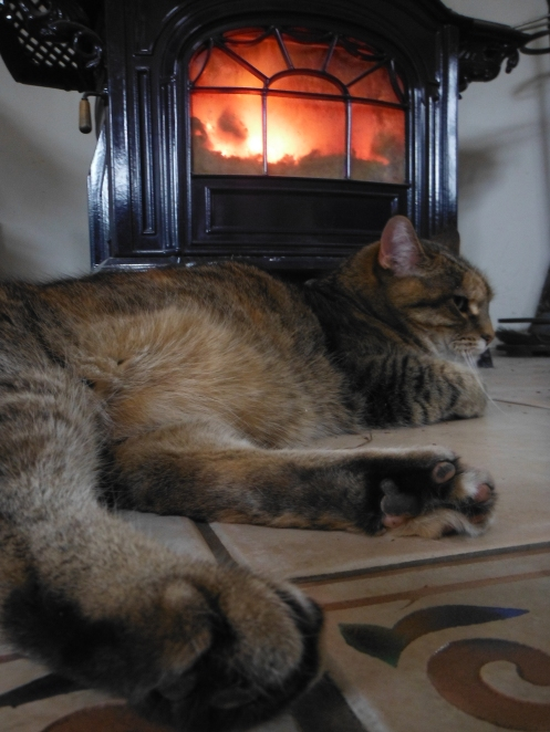 After six weeks of unrest, our foster feline has finally assumed her rightful place by the fire, with three dogs looking on in awe. Peace on earth and goodwill towards all creatures. Here we grow in 2013!