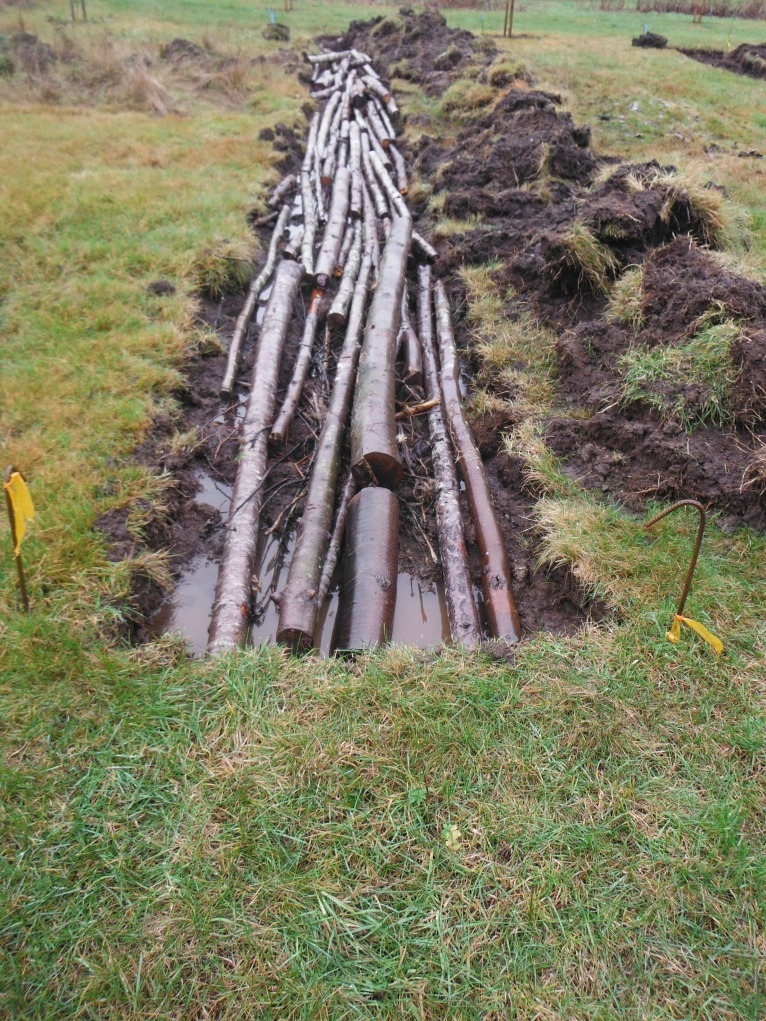 Step Two: fill the trench with coarse woody debris