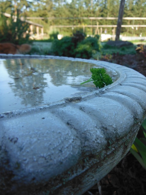 frosty bird bath