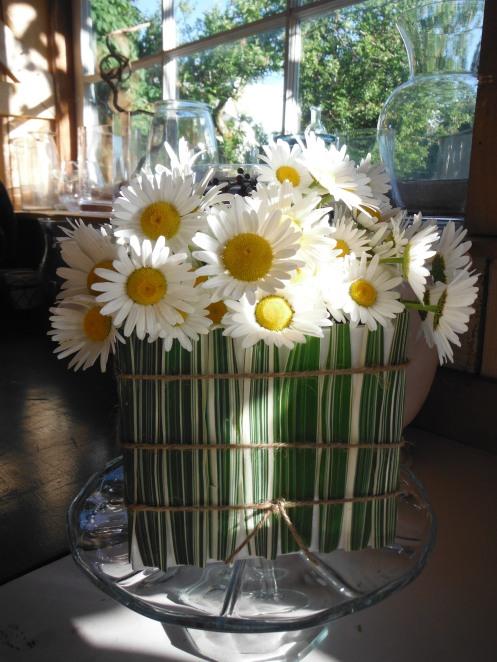 daisies in a grass box