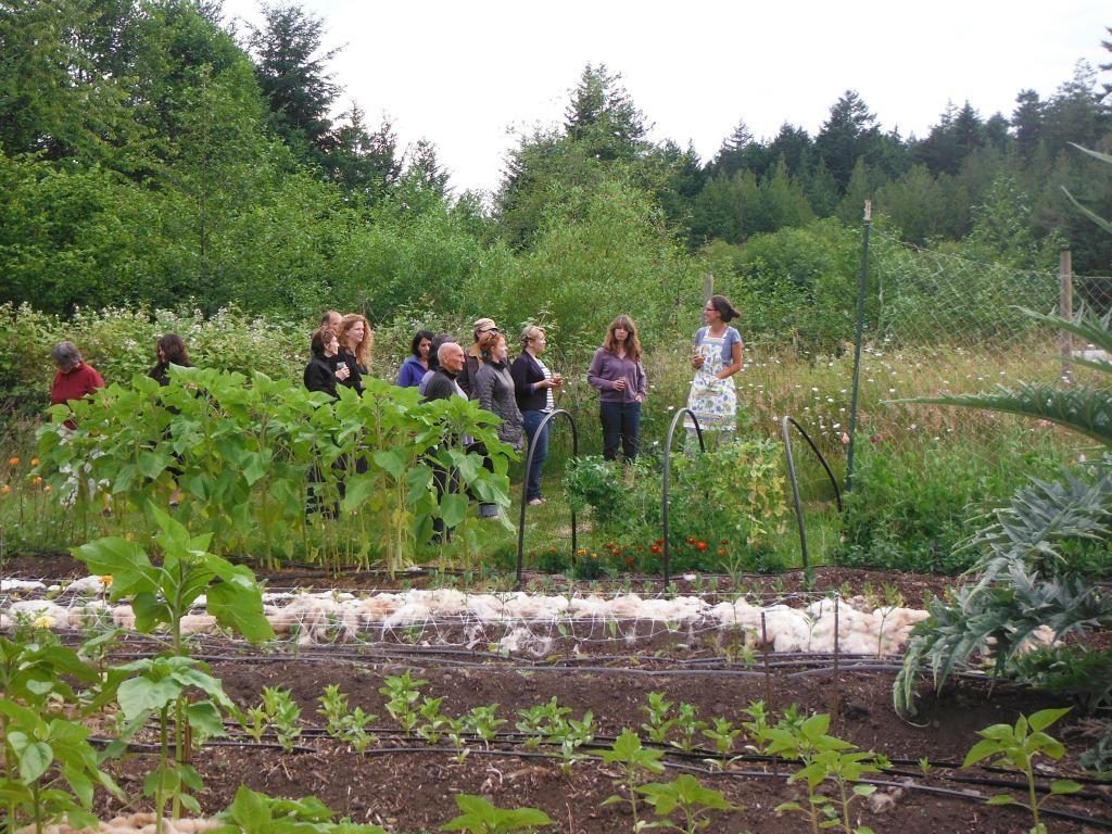 Tour of the cut flower gardens
