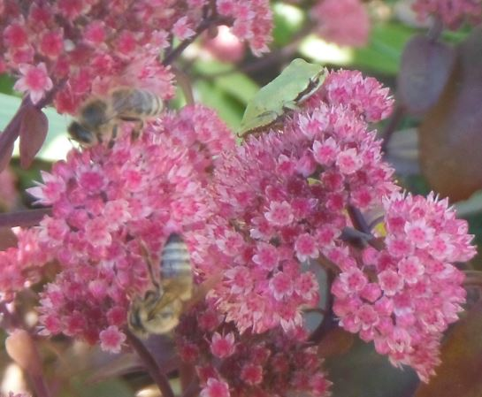 tree frog and honey bee